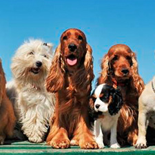 dog and puppy boarding services for san antonio dog owners