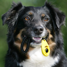 dog & puppy training services, tips and packages