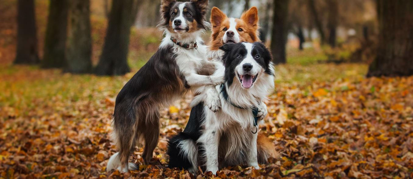 Dog Training and Boarding San Antonio Texas