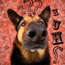 Dog and Puppy Training and Boarding Frequently Asked Questions