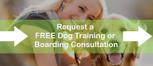 Request a free dog training and boarding consultation.