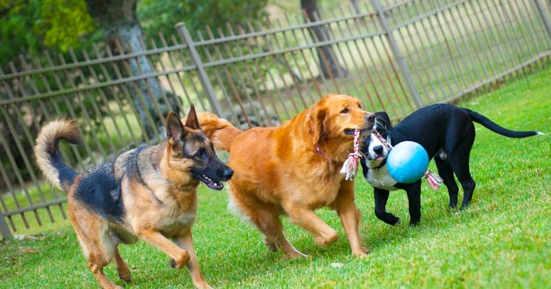 Train your dog with positive training tactics