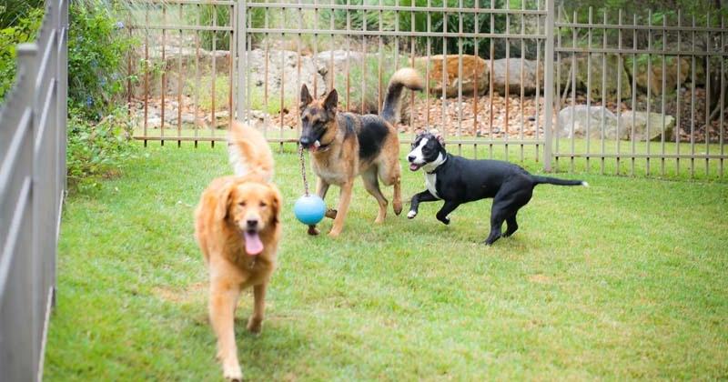 best dog training san antonio