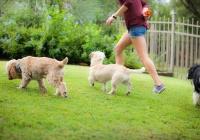 San Antonio Dog Training Co. San Antonio Tx