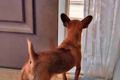 Dog Doorbell Halloween