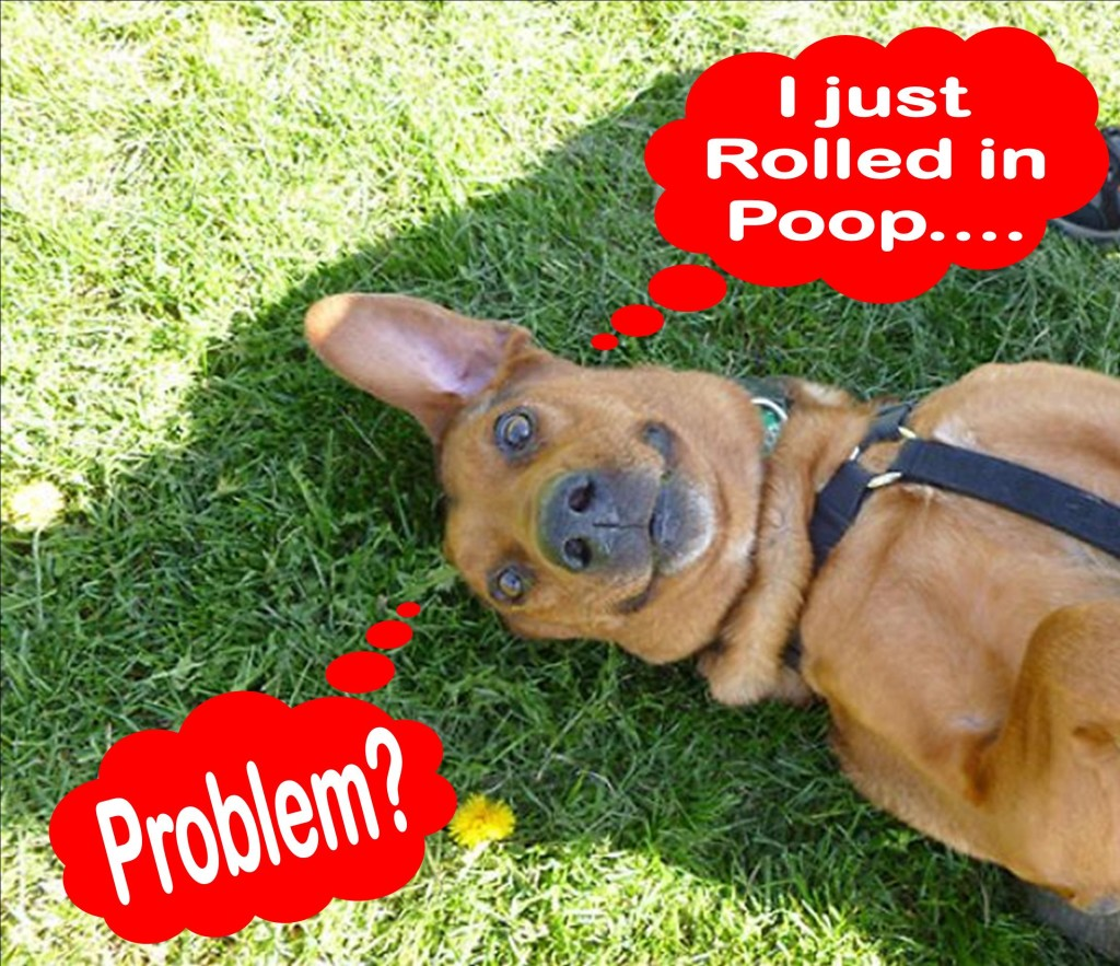 Why Does My Dog Roll In Stinky Stuff Pawsitive Solutions