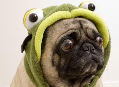 halloween-hazards-dog-frog_1