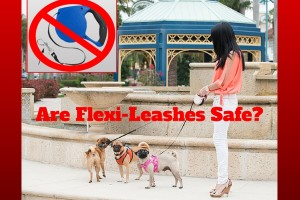 Are Flexi-Leashes Safe_-1