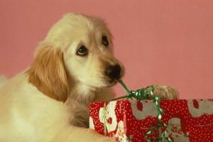 Dog safety at Christmas