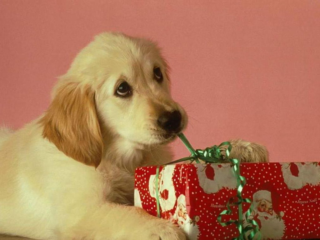 Dog safety at Christmas