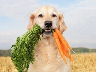My Dog Loves Carrots