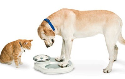 Dog Dieting Tips