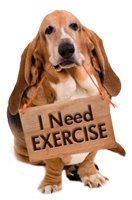 Dogs Need Exercise