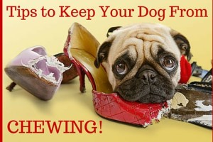 Tips Keep Your Dog From Chewing