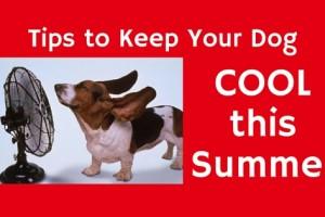 Cool Dog Tips