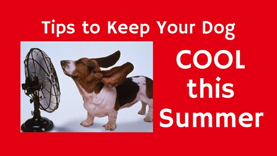 Tips To Keep Your Dog Cool This Summer Pawsitive Solutions
