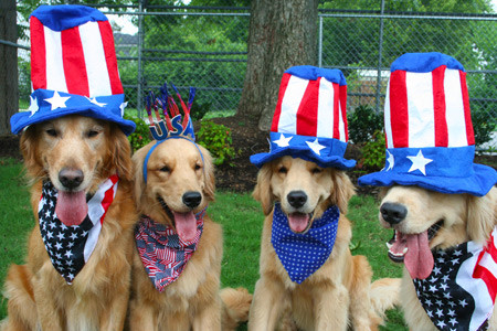 Image result for july 4th dog