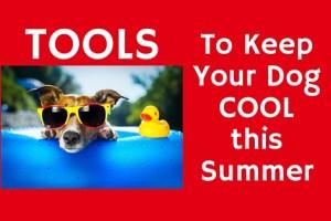 Dog Tools
