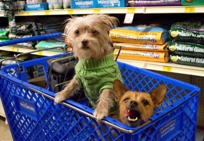 Shopping-Dog-Food