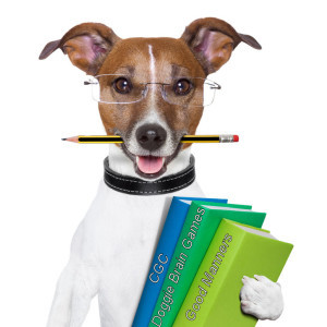 back to school dog