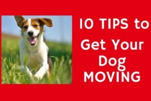 Keep Dog Moving