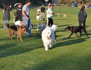 dogparks