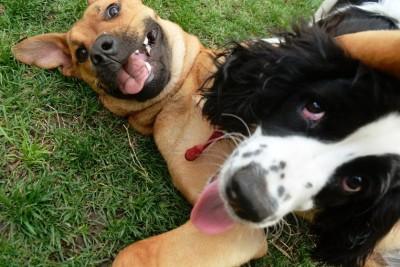 play_recreation_dogsplaying