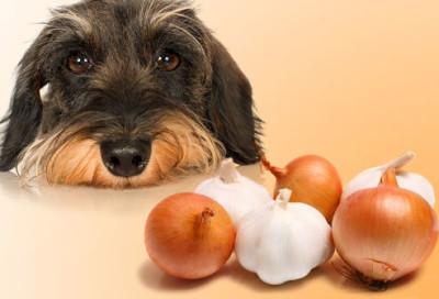 jiu_rf_photo_of_sad_dog_and_onions