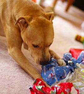 dog_gift