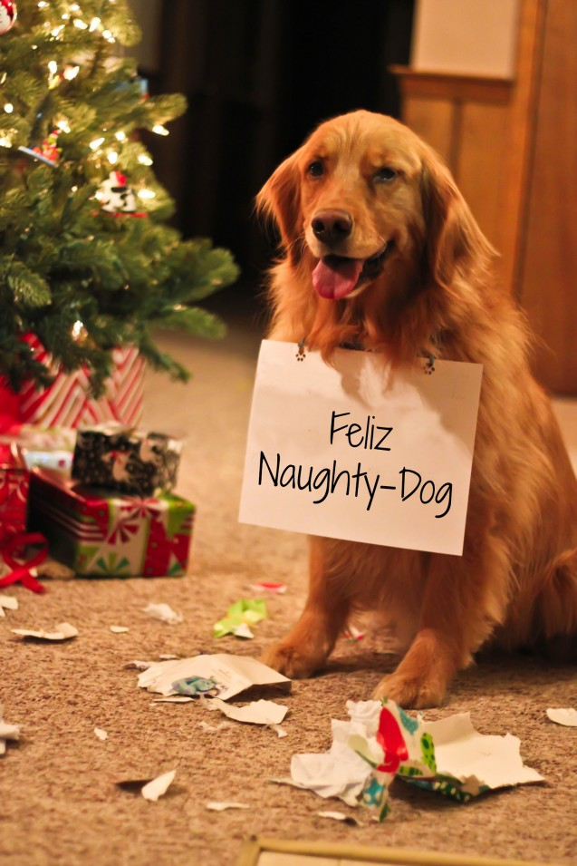 Tips to Keep Your Dog Safe During the Holidays - Pawsitive Solutions