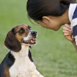 istock_000006352611girl-with-beagle