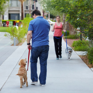 Dogs-walking-neighborhood
