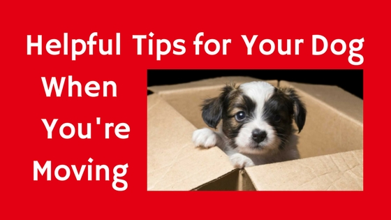 Moving with your dog (2)