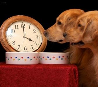 dog-routine
